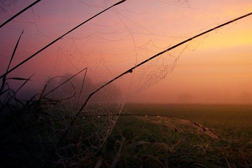 Nature, Sunset, Fog, Cobweb, Sky, Dawn, Dusk, Foggy