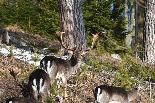 Nature, Wood, Deer, Animal Life, Tree, Mammal, Animals