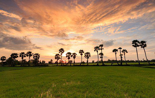 Grass, Tree, Field, Nature, Landscape, Viet Nam, Sunset