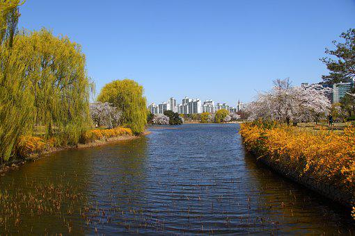Wood, Nature, The Body Of Water, River, Lake, Ilsan