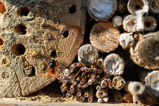 Nature, Wood, House, Insect, Bee, Native, Wild, Animal