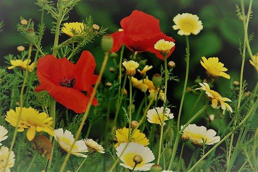 Nature, Plant, Summer, Field, Sheet