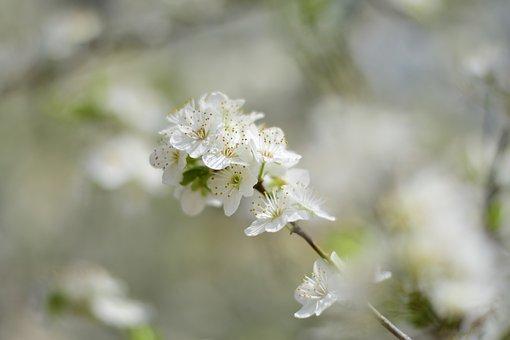 Nature, Flower, Plant, Season, Tree, Temperate Climate