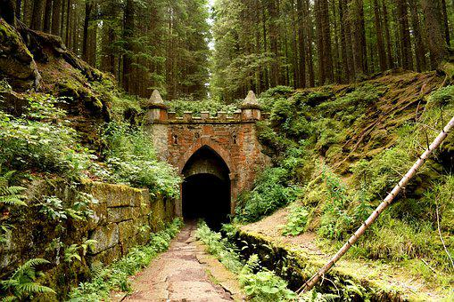 Wood, Nature, Tree, Travel, Landscape, Wall, Passage