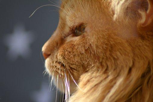 Cat, Profile, Red, Nose, Cat Nose, Schnätzchen