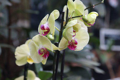 Orchid, Flower, Blooming, Plant, Nature, Beautiful