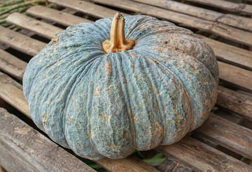 Large, Pumpkin, Squash, Plant, Nature, Food, Vegetable