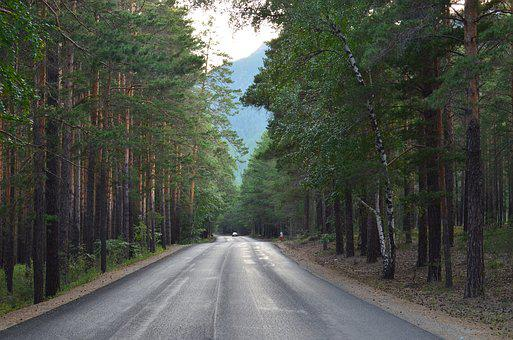 Road, Tree, Direction, Wood