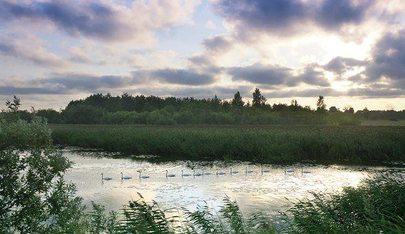 Partly Cloudy, A Flock Of Swans, Sunset On The River