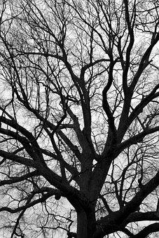 Tree, Branch, Wood, Trunk, Landscape, Monochrome