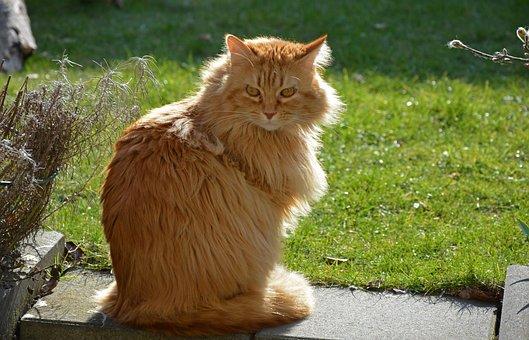 Cat, View, Backlight, Sitting, Sit, Attention, Garden