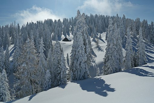 Snow, Winter, Mountain, Wood, Cold, Snowy