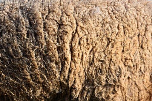 Wool, Sheep's Wool, Hair, Unprocessed, Raw Wool, Raw