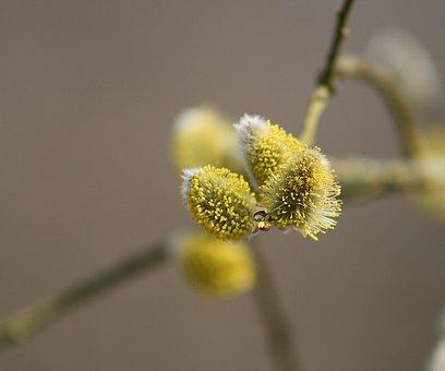 Plant, Flower, Nature, Bud, Pollen, Close