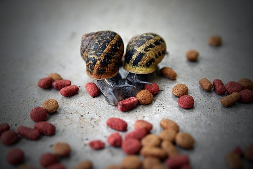 Food, Desktop, Refreshment, Snail, Gastropod, Slug