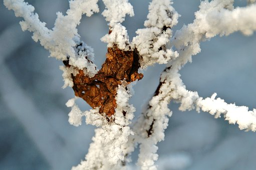 Nature, Frost, Sheet, Snow, Frozen, Branch, Branches
