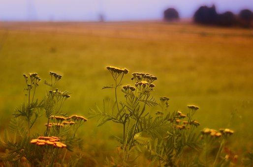 Grass, Grassland, Nature, Landscape, Mood, Evening Sun