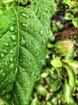 Leaf, Flora, Nature, Growth, Food, Rain, Moisture, Wet