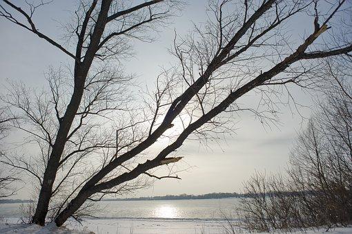 Tree, Landscape, Winter, Nature, River, Snow, Coldly