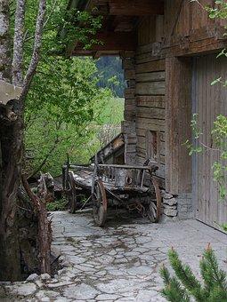 Wood, Woods, Tree, Nature, Old, Dare, Tyrol