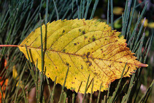 Leaf, Nature, Plant, Autumn, Season, Yellow, Dry
