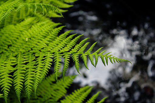 Fern, Plant, Sheet, Nature, Summer, Background, Tree