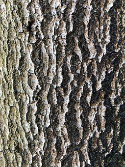 Pattern, Bark, Wood, Rough, Tree, Nature, Dry, Texture