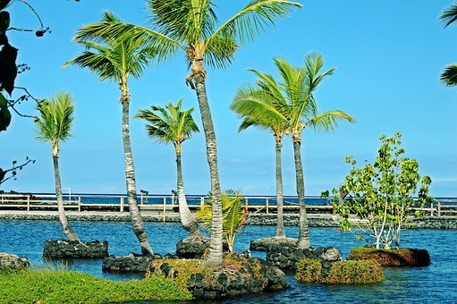 Palm, Water, Travel, Tropical, Resort, Beach, Vacation