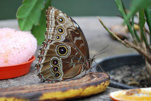 Nature, Butterfly, Insect, Animal, Summer, Wildlife