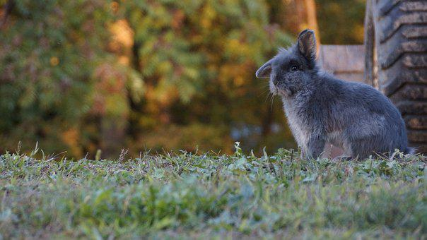 Nature, Animal, Mammal, Wildlife, Grass, Fall, Cute