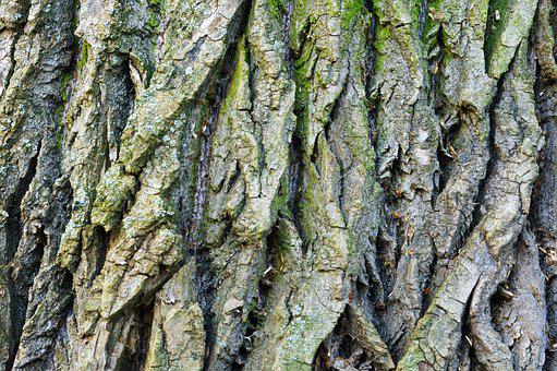 Bark, Tree, Wood, Background, Dry, Forest, Old, Pine