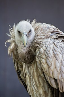 Bird, Feather, Animal World, Bird Of Prey, Nature