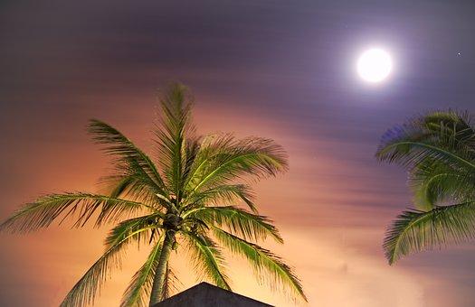 Tropical, Arecaceae, Beach, Summer, Sun, Mexico, Cd