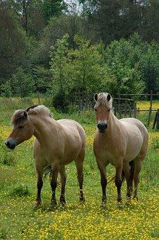 Mammals, Meadow, Horses, Beige, Ungulate