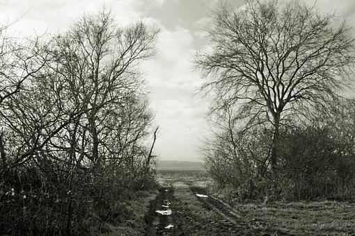 Moor, Fog, Tristesse, Melancholy, Teufelsmoor, Birch