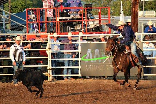 Rodeo, Human, Animals, Cattle, Bull, Calf, Sport
