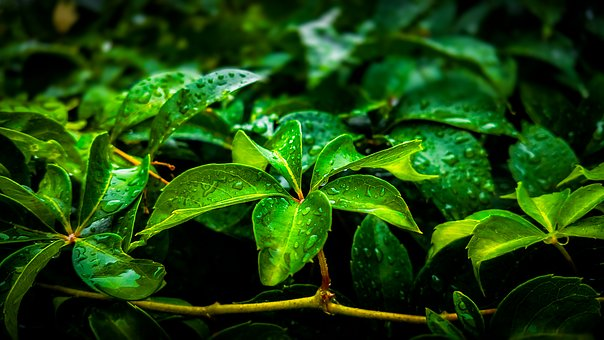 Leaf, Nature, Flora, Outdoors, Environment, Growth