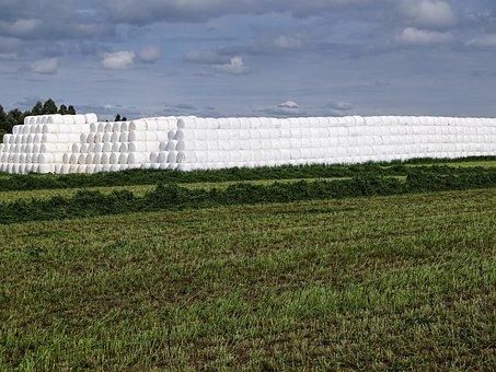Nature, Field, Landscape, Sky, Products, Alfalfa, Farm