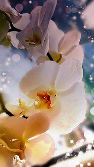 Orchid, Filters