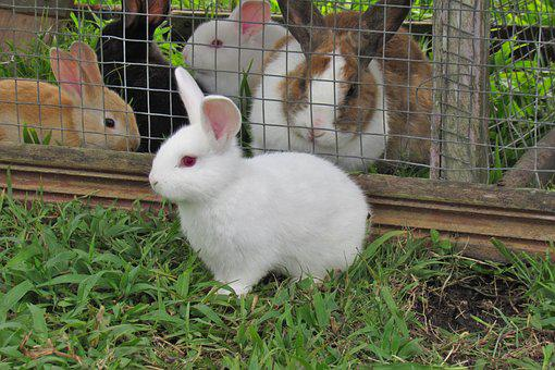 Rabbit, Cute, Bunny, Animal, Grass, Freedom, White
