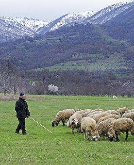 Shepherd, Sheep, Green Grass, Psalm 23, Green, Mountain