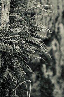 Nature, Tree, Wood, Plant, Season, Leaf, Pattern