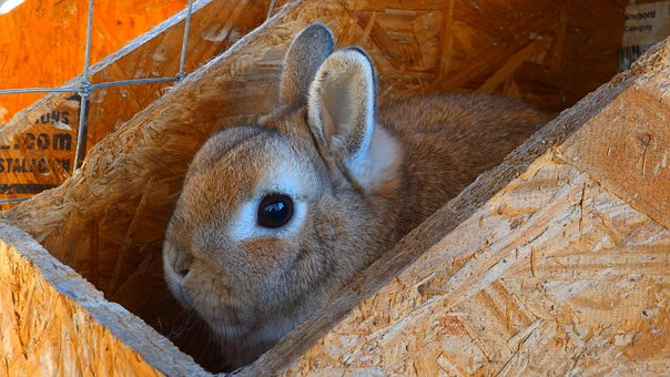 Nature, Animal, Rabbit, Cute, Mammal, Easter, Bunny