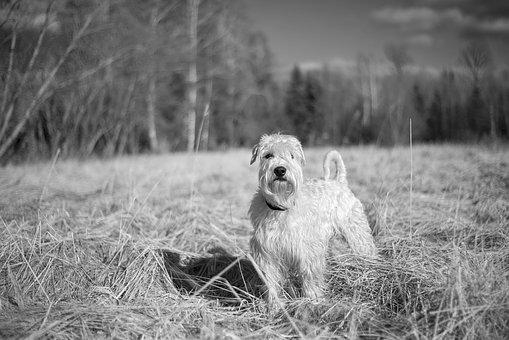 Nature, Grass, Dog, Mammal, Animal, Outdoors, Field