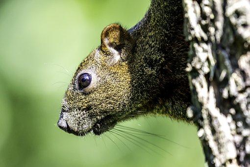 Wildlife, Nature, Animal, Outdoors, Mammal, Squirrel