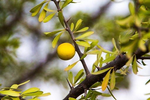 Branch, Tree, Nature, Leaf, Plant, Argan Gold Cosmetics
