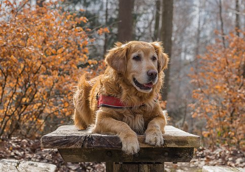 Nature, Dog, Cute, Animal, Autumn, Screen Background