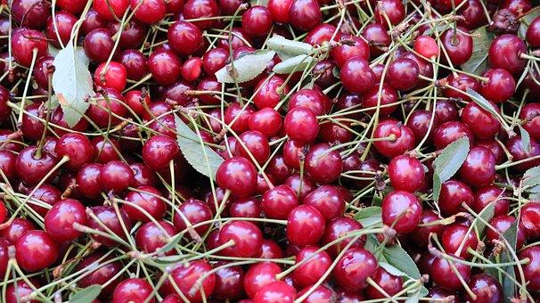 Fruit, Food, Nature, Leaves, Freshness, Sweet, Summer