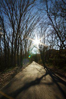 Nature, Tree, Outdoors, Wood, Landscape, Road, Trees