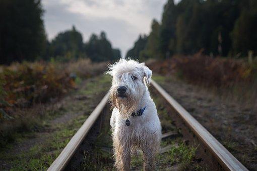 Nature, Outdoors, Railroad, Summer, Natural, Travel